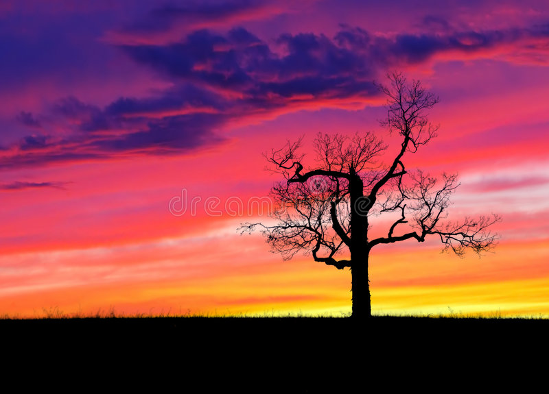 孤立日落结构树 免版税库存图片