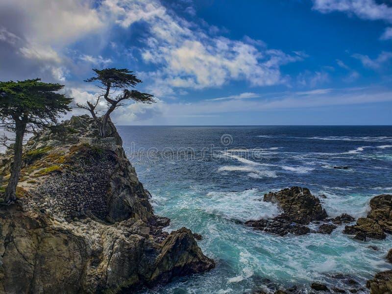 孤立柏树的看法在17英里驱动的在蒙特里,有绿松石海浪的加利福尼亚 免版税库存照片