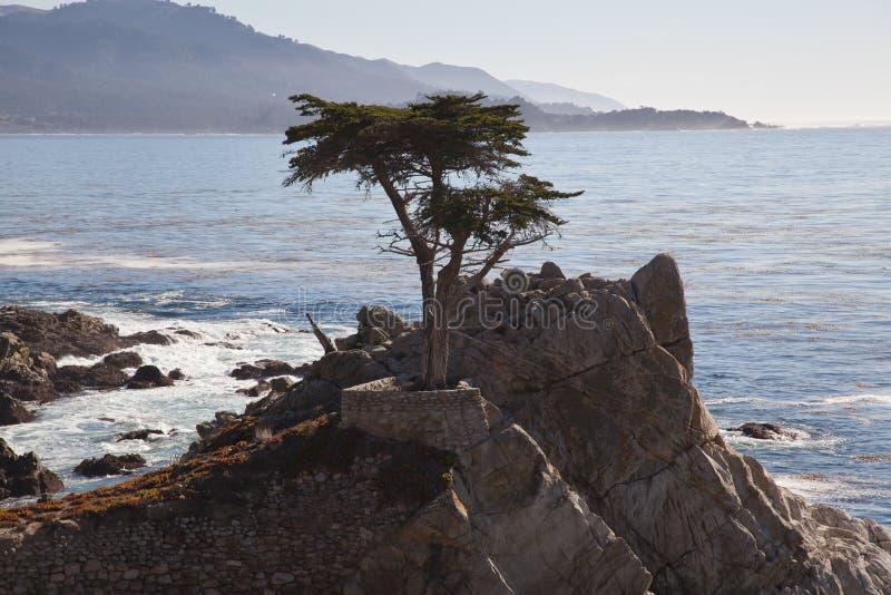 孤立柏树, Pebble海滩,加州 免版税库存照片