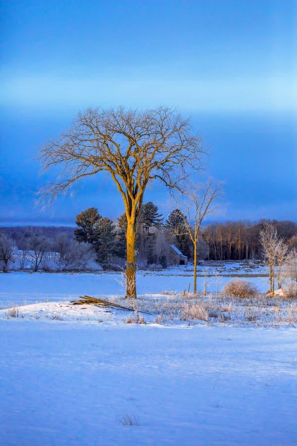 孤立树垂直 免版税库存图片