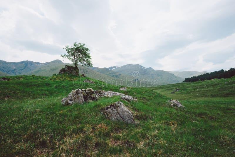 孤立树,苏格兰 库存图片
