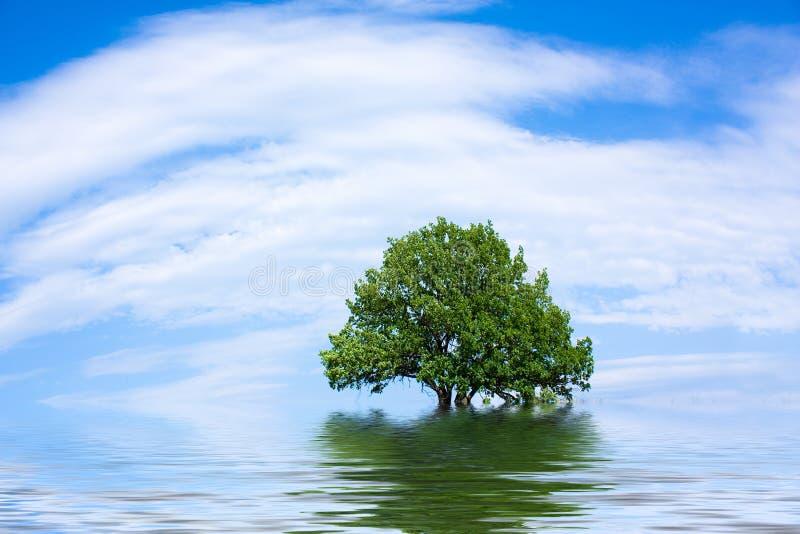 孤立橡木老结构树 库存图片