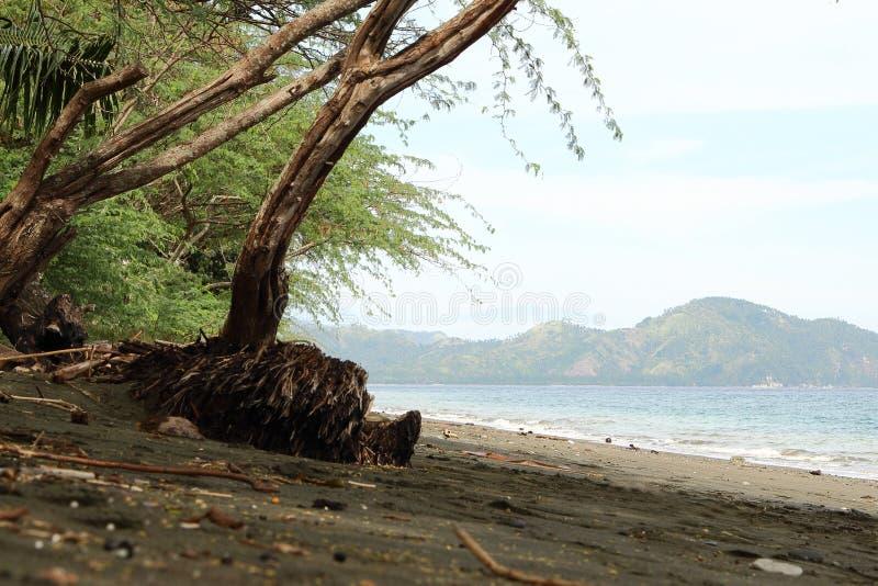 孤立海滩有雾的背景 免版税库存图片