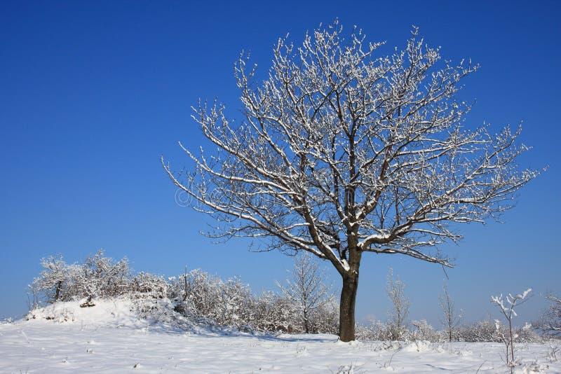 孤立结构树在冬天 库存照片