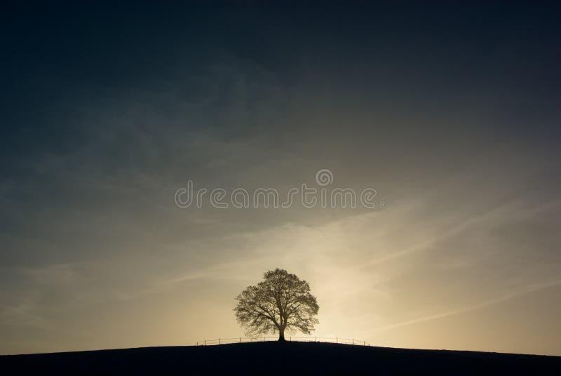 孤立结构树 图库摄影