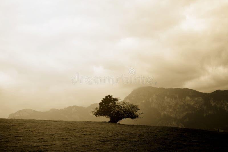 孤立落寞树上面小山在阿尔卑斯 免版税图库摄影