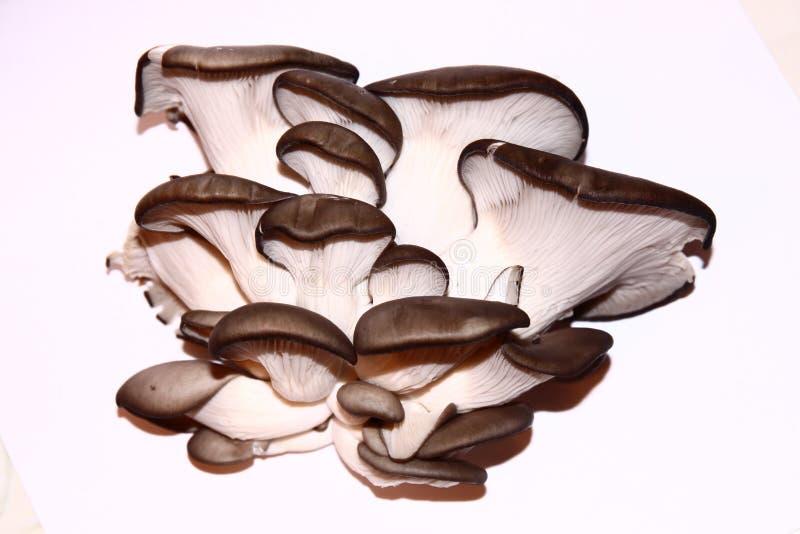孤立蘑菇 库存照片