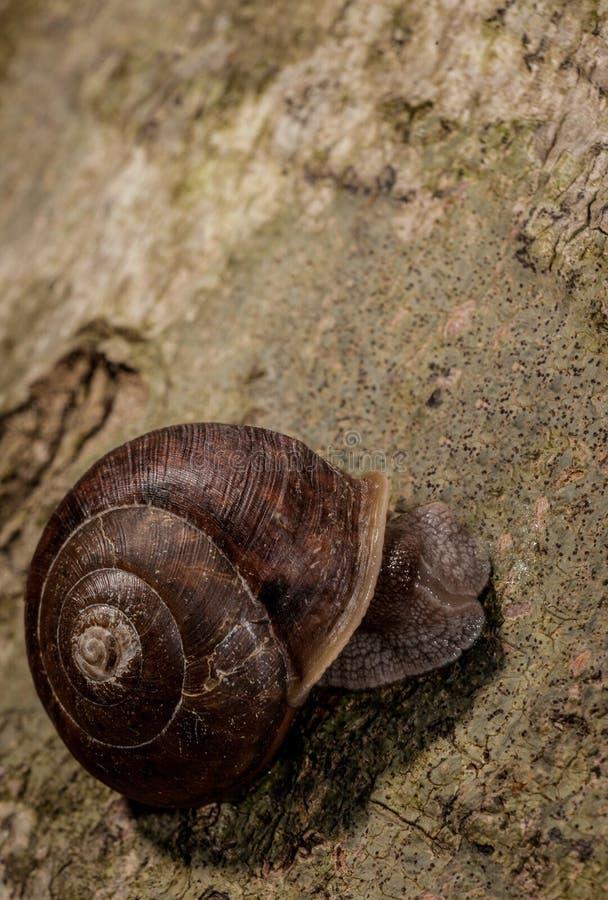 孤立蜗牛 库存照片