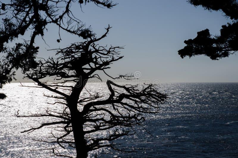 孤立赛普里斯剪影,看见从17英里驱动在蒙特里半岛圆石滩  加利福尼亚 免版税库存图片