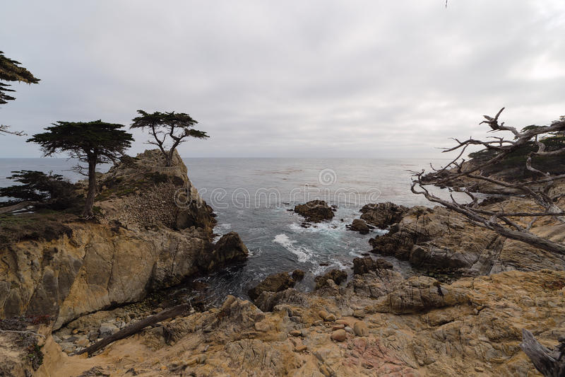 孤立赛普里斯, Pebble海滩,加利福尼亚 免版税库存照片