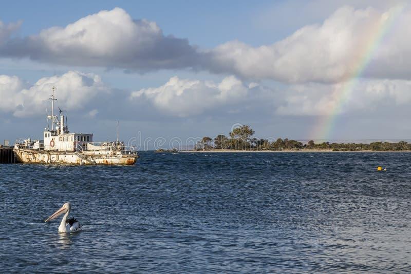 孤立鹈鹕在与一条老船和彩虹在天空,坎加鲁岛,澳大利亚南部的海湾在背景中游泳 免版税库存图片