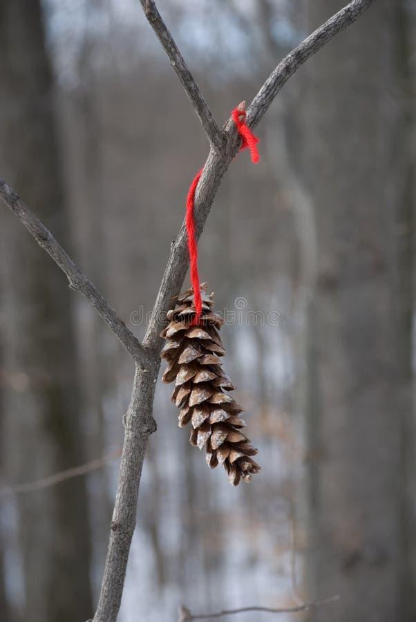 孤立pinecone 免版税库存图片