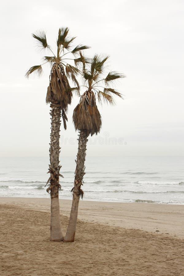 孤零零棕榈 免版税库存照片