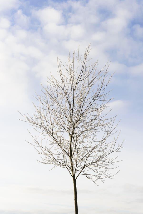 孤零零结构树 库存照片