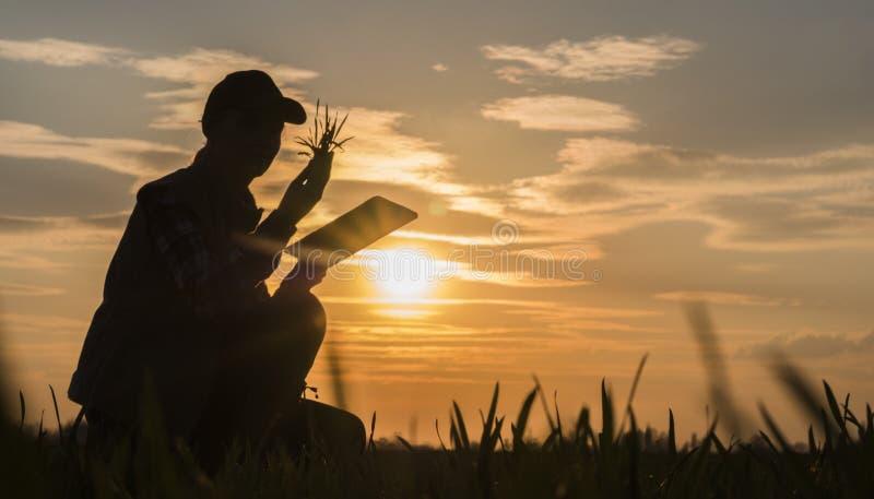 学习一棵植物的幼木的领域的年轻女人农夫,使用片剂 库存图片
