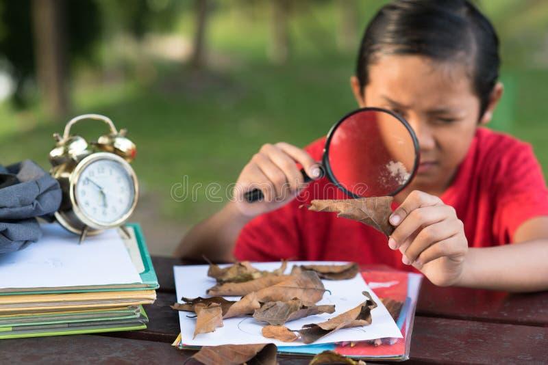 学习有放大镜的年轻亚裔男孩一片叶子 免版税库存照片
