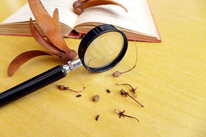 学习植物标本的生物科学家 免版税库存照片