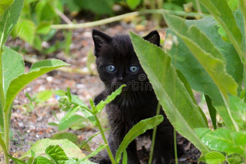 学会世界走在草灌木的小小猫  免版税库存照片