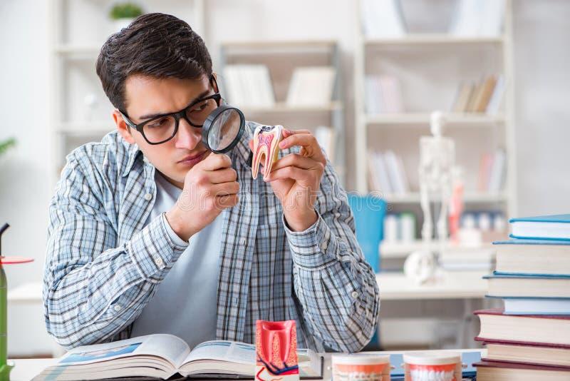 学会牙科的医科学生在教室 免版税库存照片