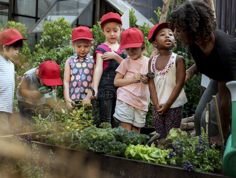 学会生态从事园艺的老师和孩子学校 免版税库存照片