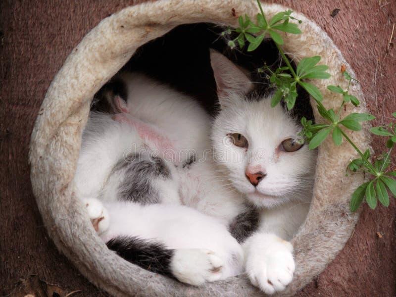 Download 婴孩妈妈Cat和 库存照片. 图片 包括有 眼睛, beauvoir, 哺乳动物, 敬慕, 小猫, 黄色 - 30338202
