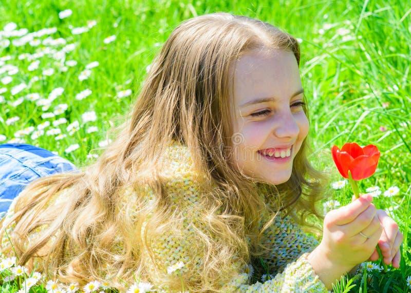 孩子享受郁金香芬芳,当说谎在草甸时 愉快的面孔的女孩在晴朗的春日拿着红色郁金香花 库存照片