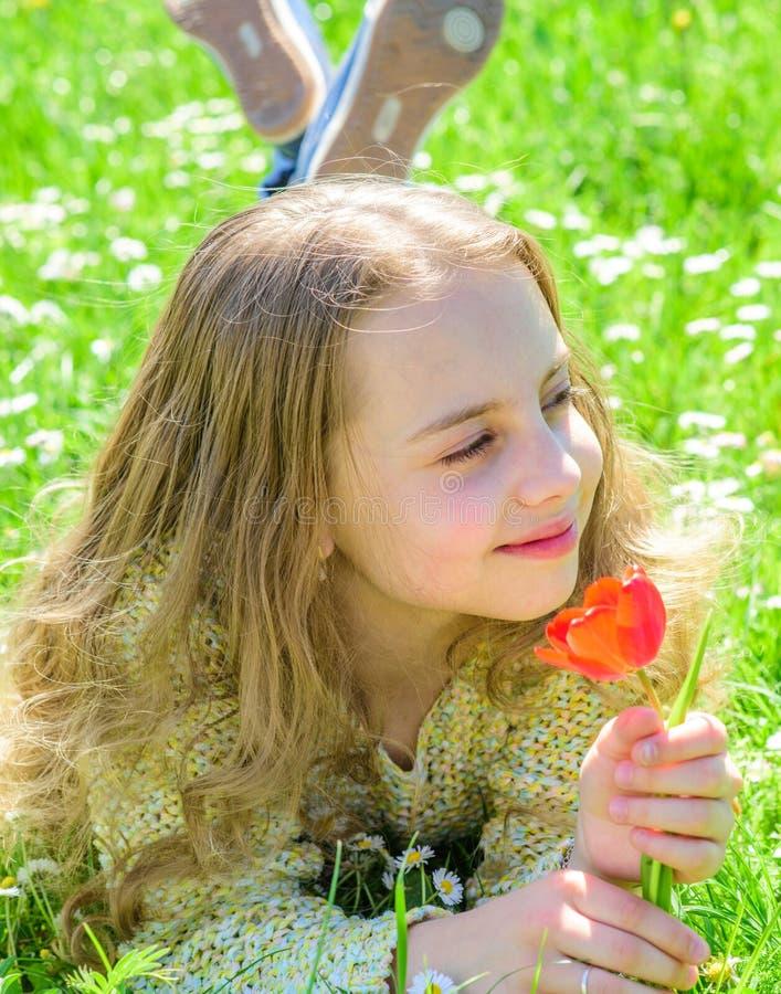 孩子享受郁金香芳香,当说谎在草甸,关闭时 愉快的面孔的女孩拿着在晴朗的春天的红色郁金香花 库存照片