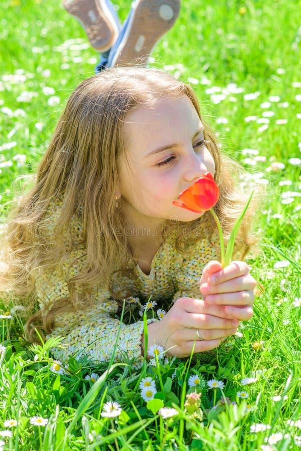 孩子享受郁金香芳香,当说谎在草甸,关闭时 柔软概念 有说谎在grassplot的长的头发的女孩 库存照片