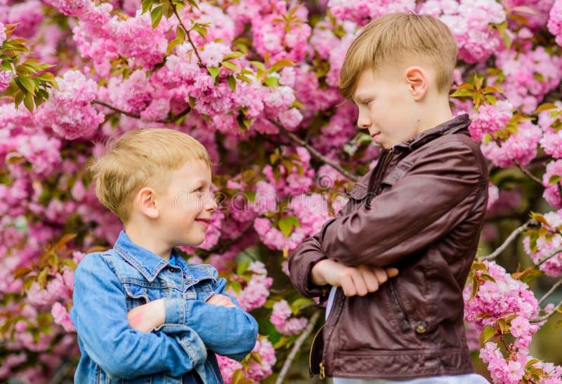 孩子反弹佐仓树背景桃红色花  r 享用樱花的兄弟 ?? 库存图片