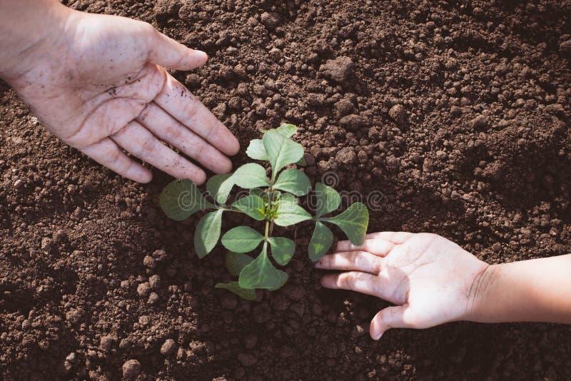 孩子和父母递一起种植在黑土壤的年轻树 免版税图库摄影