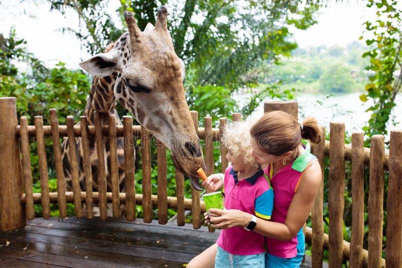 孩子在动物园喂养长颈鹿 在徒步旅行队公园的家庭 免版税图库摄影