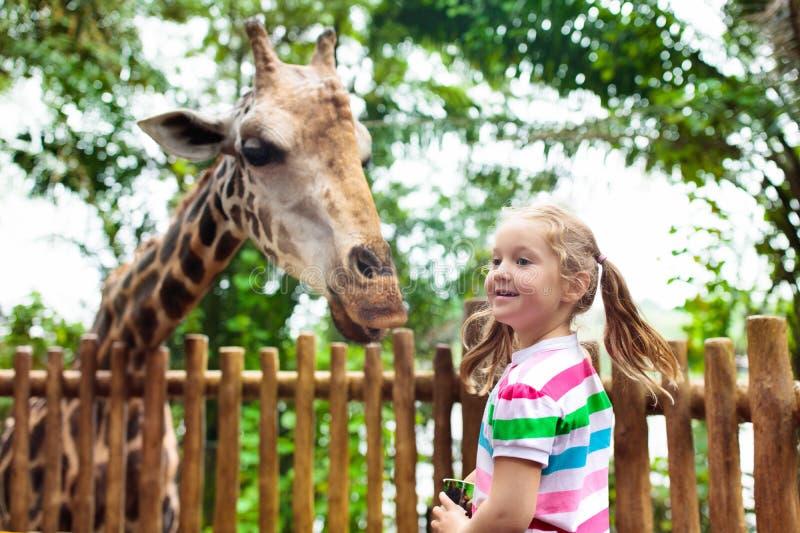 孩子在动物园喂养长颈鹿 徒步旅行队公园的孩子 库存照片