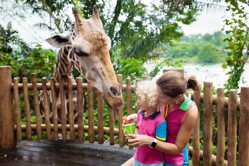 孩子在动物园的饲料长颈鹿 在徒步旅行队公园的家庭 免版税库存图片