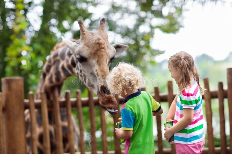 孩子在动物园的饲料长颈鹿 徒步旅行队公园的孩子 库存照片