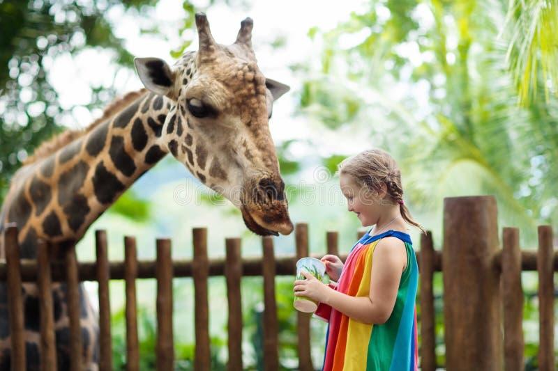 孩子在动物园的饲料长颈鹿 徒步旅行队公园的孩子 免版税库存照片