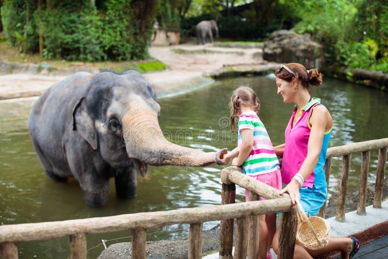 孩子在动物园里喂养大象 在野生动物园的家庭 免版税库存照片