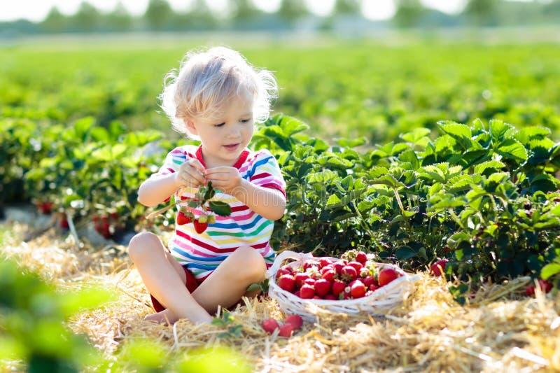 孩子在夏天摘在莓果领域的草莓 免版税库存照片