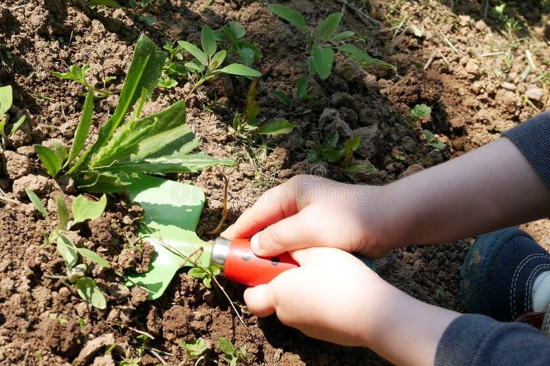 孩子在庭院里递去除杂草与玩具铁锹 库存图片