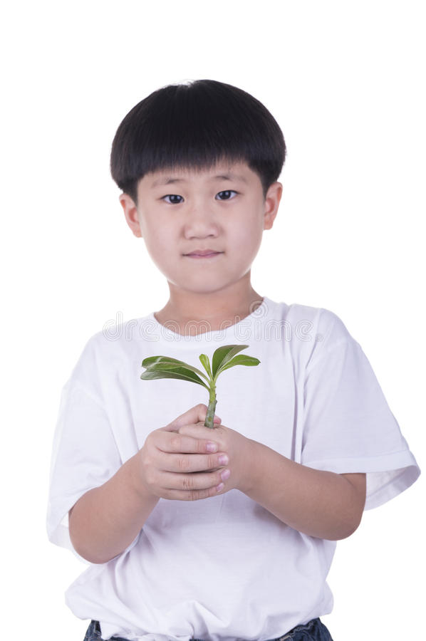 孩子在手上拿着树 免版税库存图片