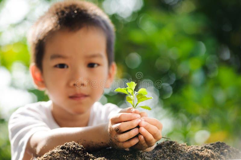 孩子在手上的拿着年幼植物在土壤上 库存图片
