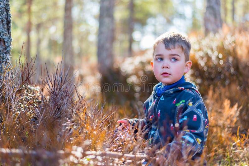 孩子在森林 库存照片
