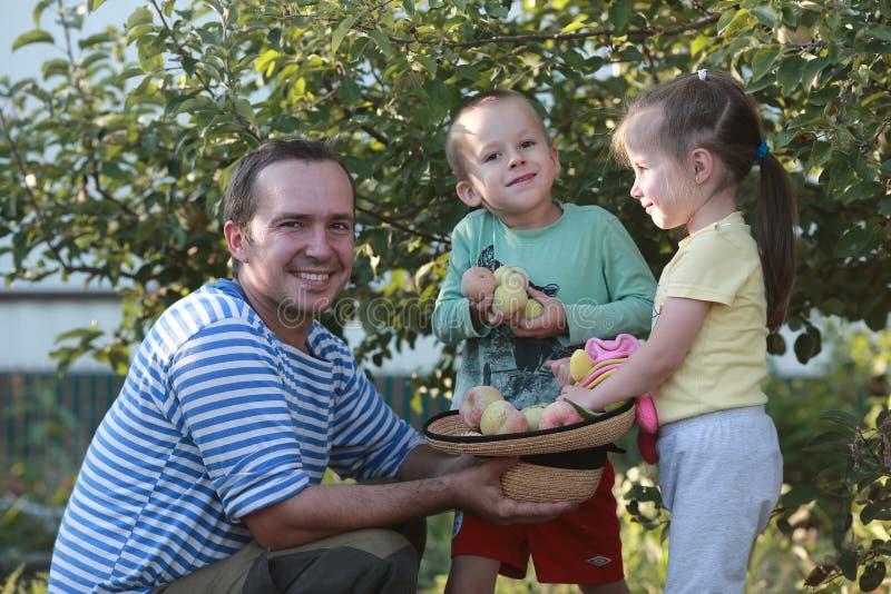 孩子帮助爸爸收获苹果 免版税图库摄影