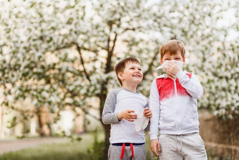 孩子抹他们的鼻子与在开花苹果树背景的餐巾  免版税库存照片