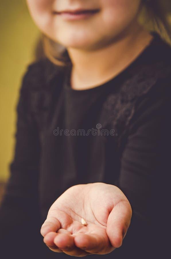 孩子握在他的手棕榈的一颗下落的牙  库存图片