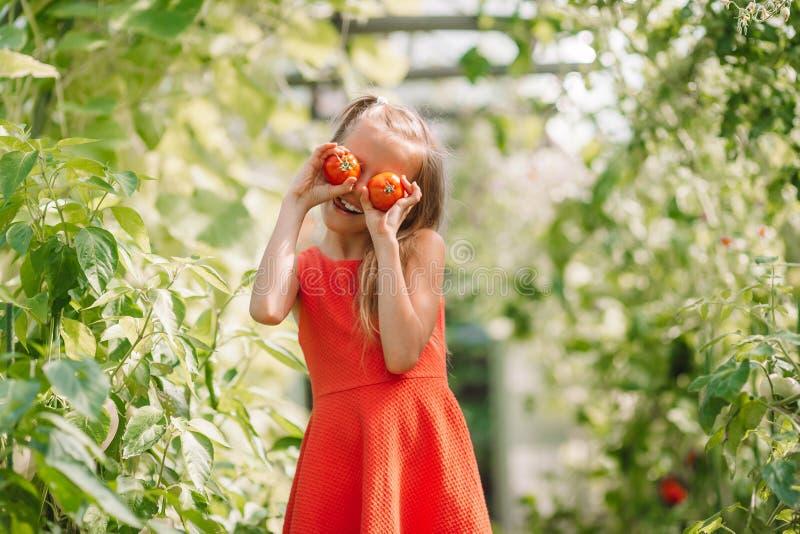 孩子画象用大蕃茄在手上自温室 免版税图库摄影