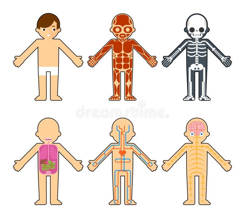 孩子的身体解剖学 向量例证