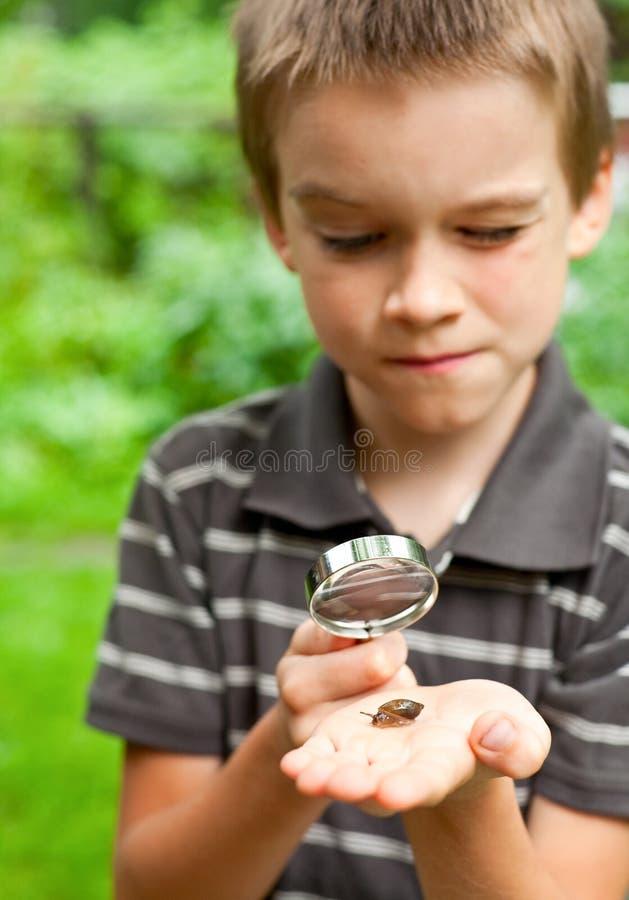 孩子观察蜗牛 图库摄影