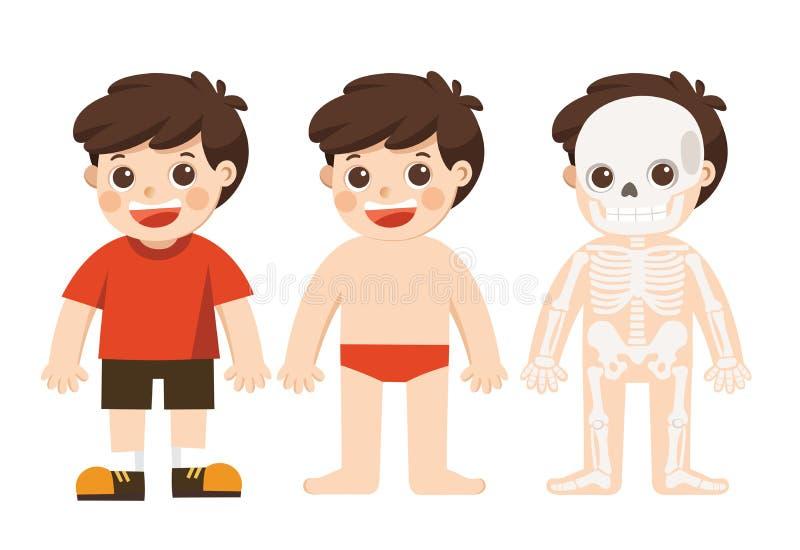 孩子身体解剖学 也corel凹道例证向量 皇族释放例证