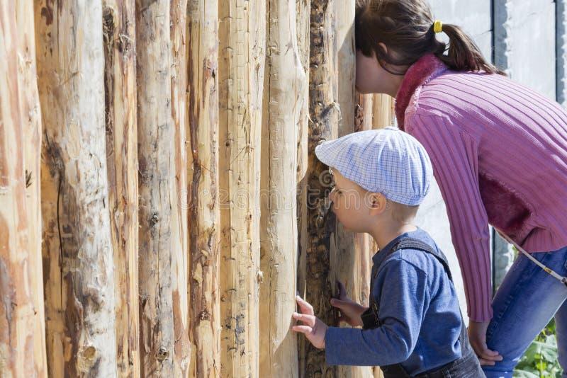 孩子通过在篱芭的孔看 库存照片