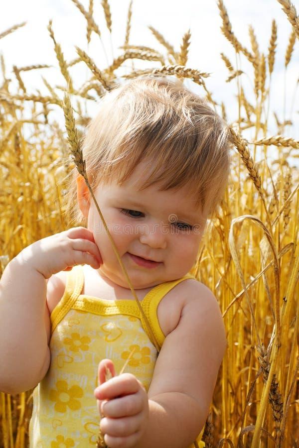 孩子钉牢麦子 库存照片